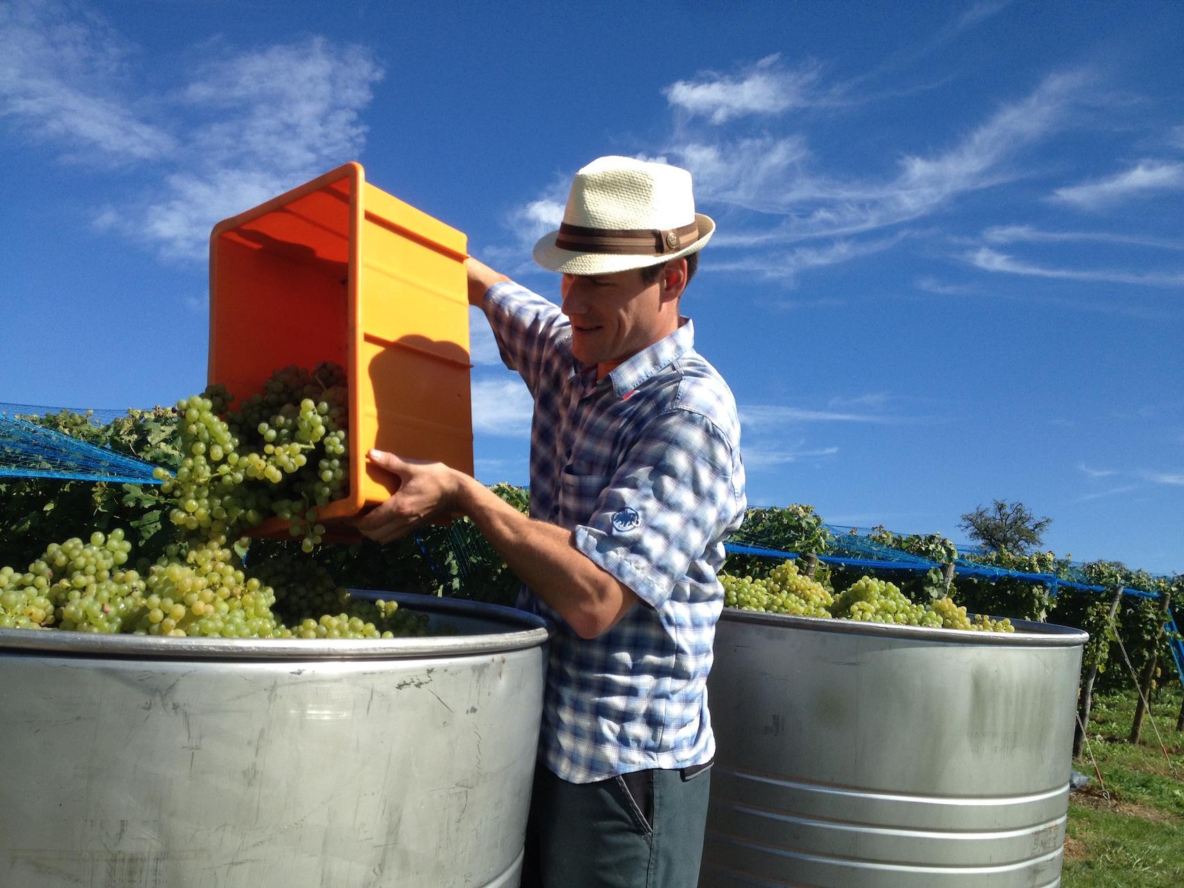 September rettet das Weinjahr